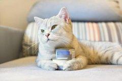 猫罐头进口报关代理|猫罐头进口所需手续